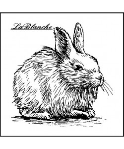 La blanche Stämpel Rabbit looking Left